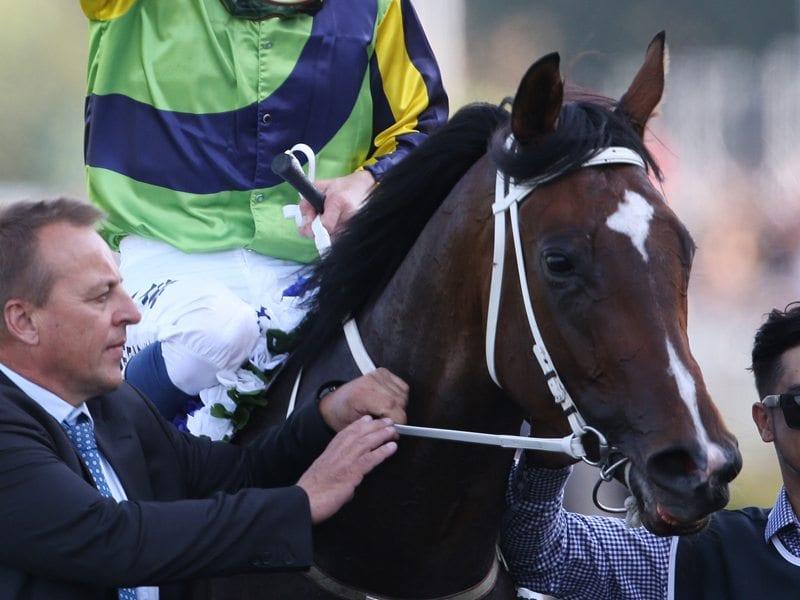 Sofia Rosa Racehorse
