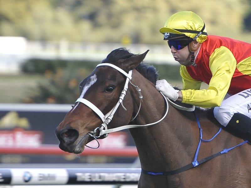 Omei Sword Racehorse