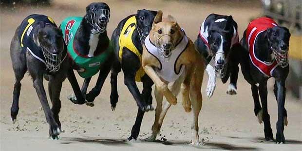 greyhound ban overturned