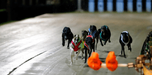 Group 1 Melbourne Cup greyhounds
