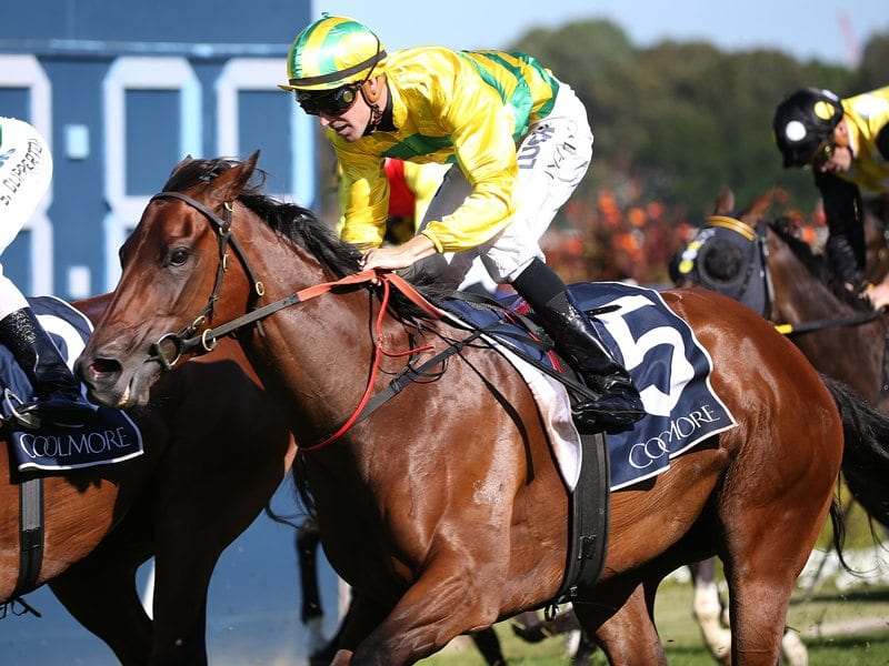 Coolmore classic betting websites gom24h betting