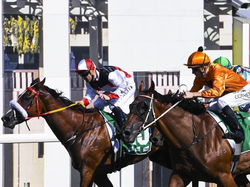 canberra cup