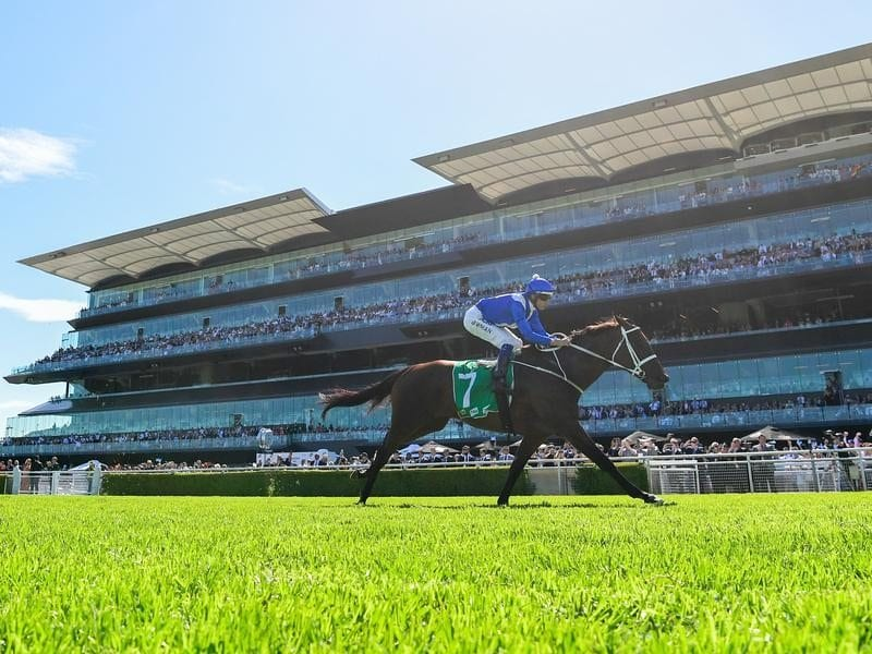 Winx winning the Chipping Norton Stakes.