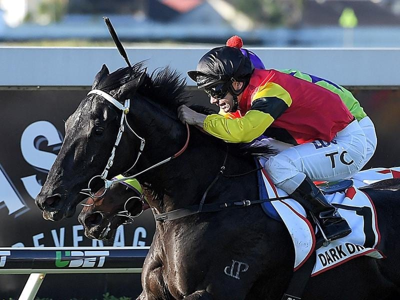 Jockey Tim Clark rides Dark Dream.