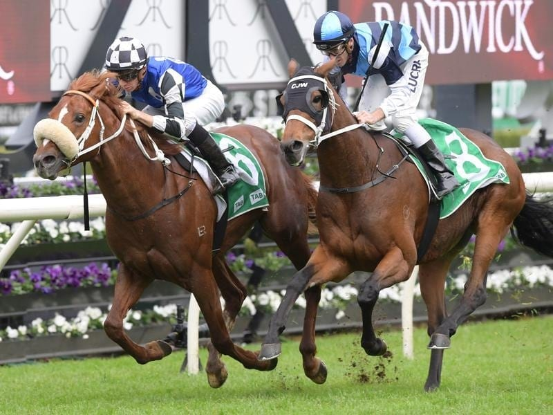Jockey Jason Collett rides Hallelujah Boy to win race 4 at Randwick