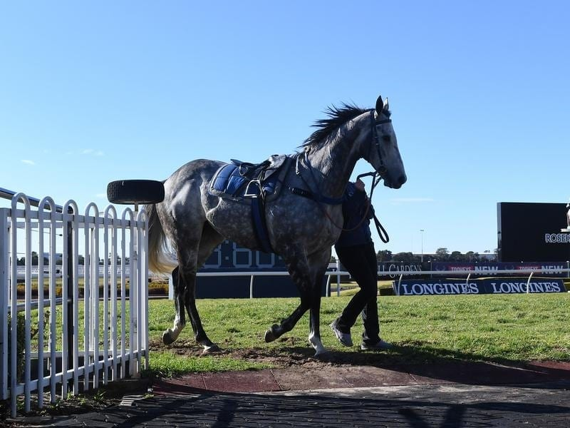 Chautauqua returns to the mounting yard at Rosehill.
