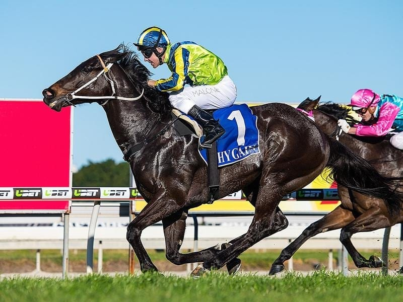 Dal Cielo wins at the Gold Coast.