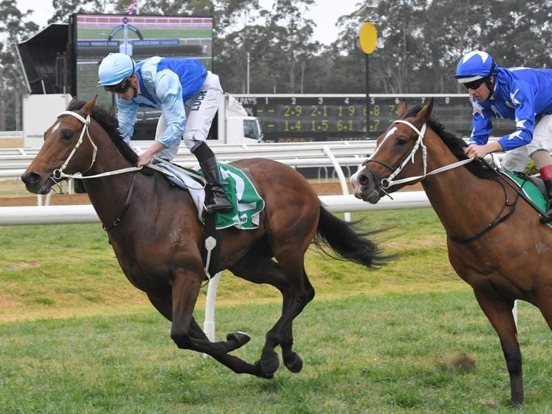 Tarka wins at Warwick Farm.