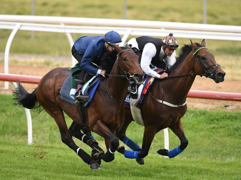 Marmelo (left) and Magic Circle gallop together.
