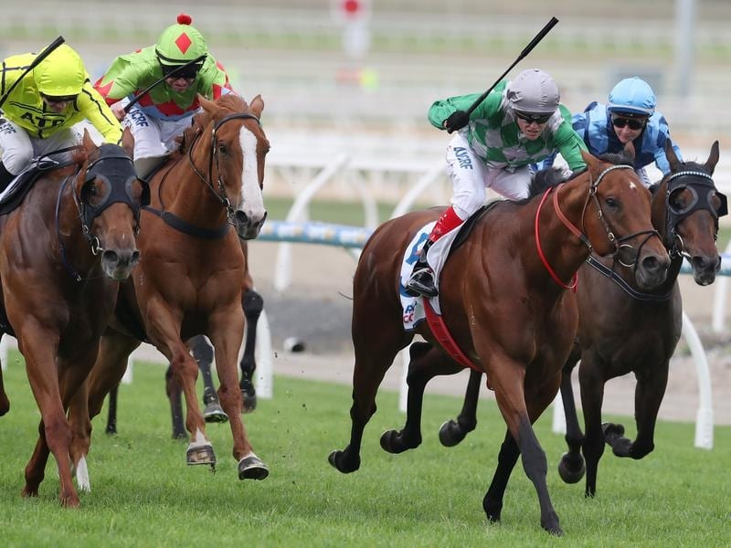 Amadeus (second right) wins at Pakenham.
