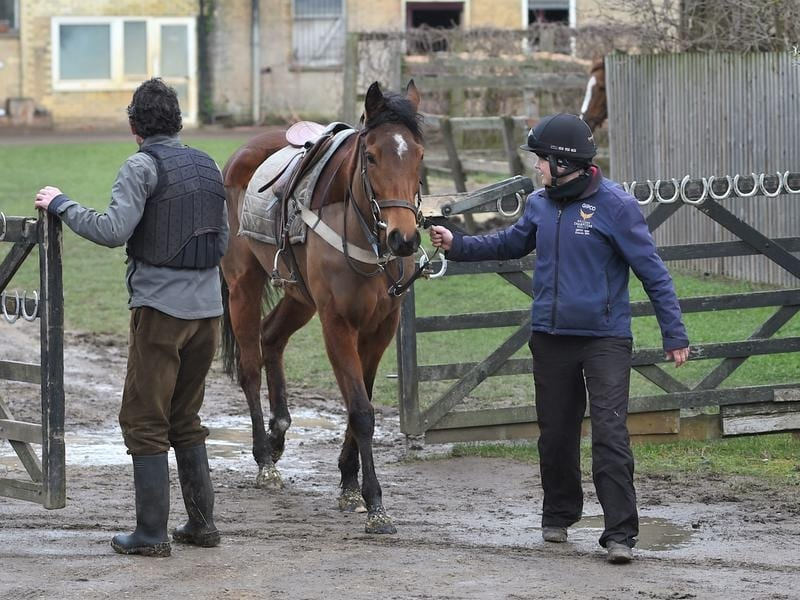 A horse and trainers