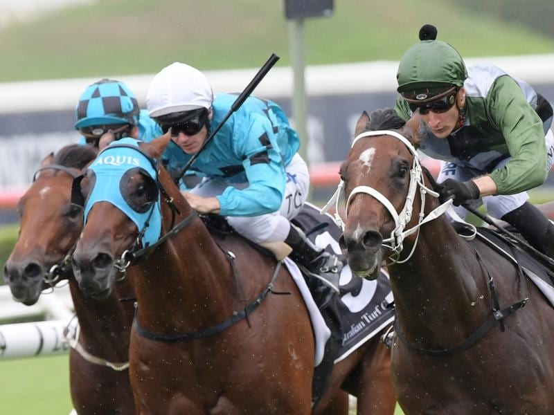 Todman Stakes