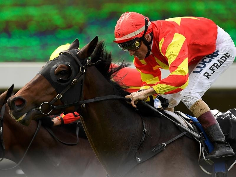 Gold Ambition will contest the Tattersall's Mile.