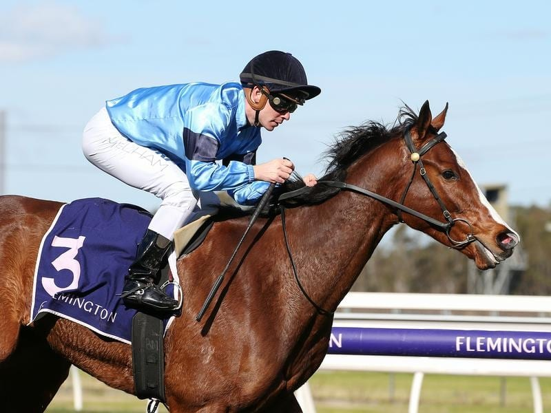 Lord Belvedere wins at Flemington.