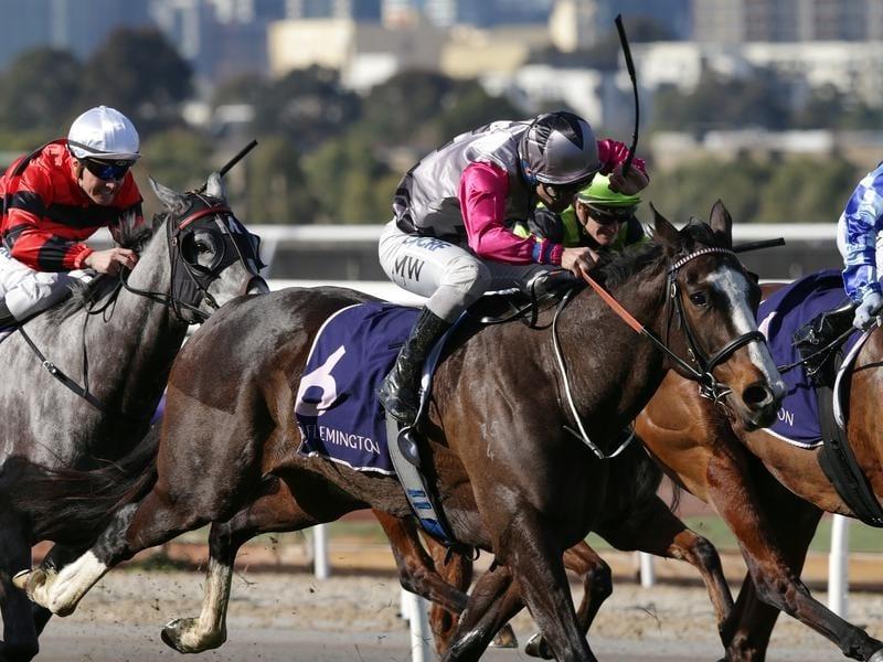 Jockey Michael Walker rides Miss Mandito to victory at Flemington.