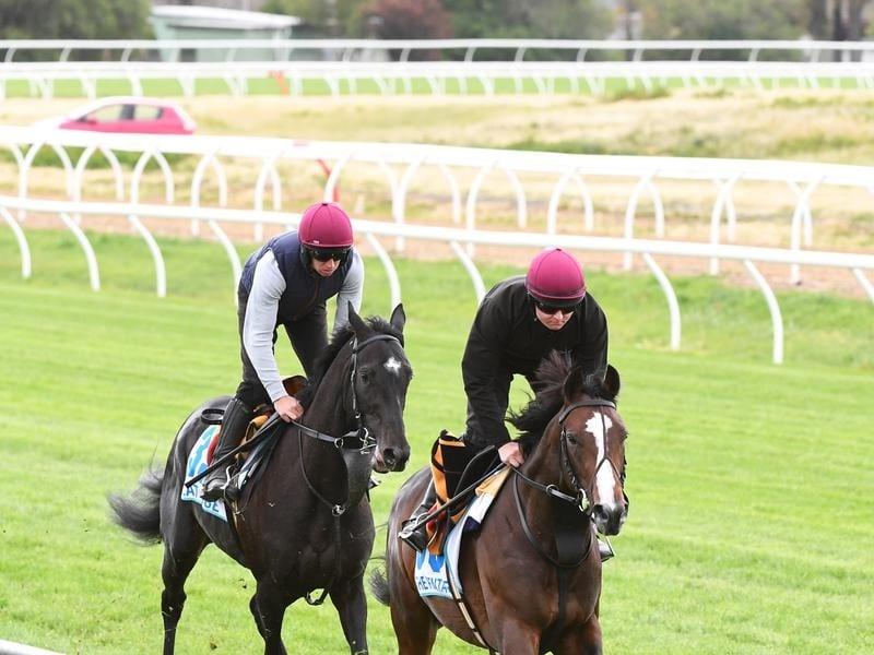 horses at werribee quarantine centre