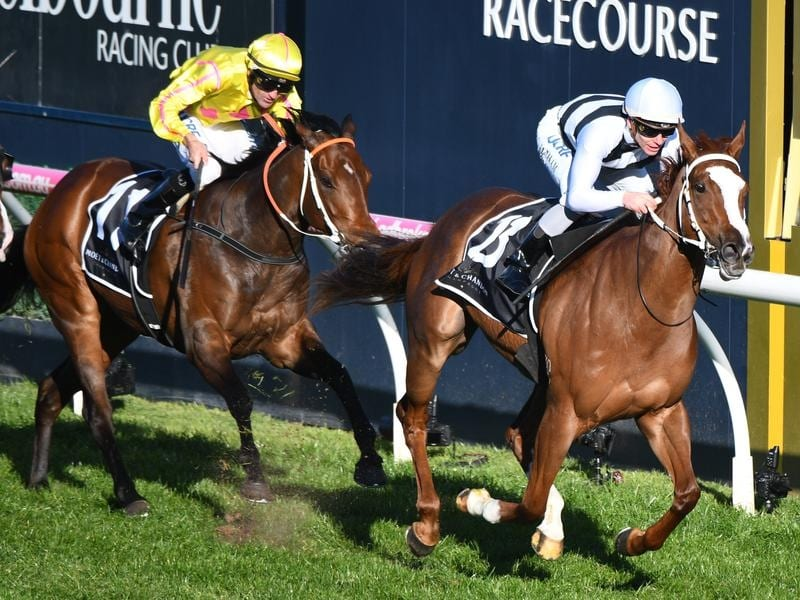 Pippie wins the Cockram Stakes at Caulfield.