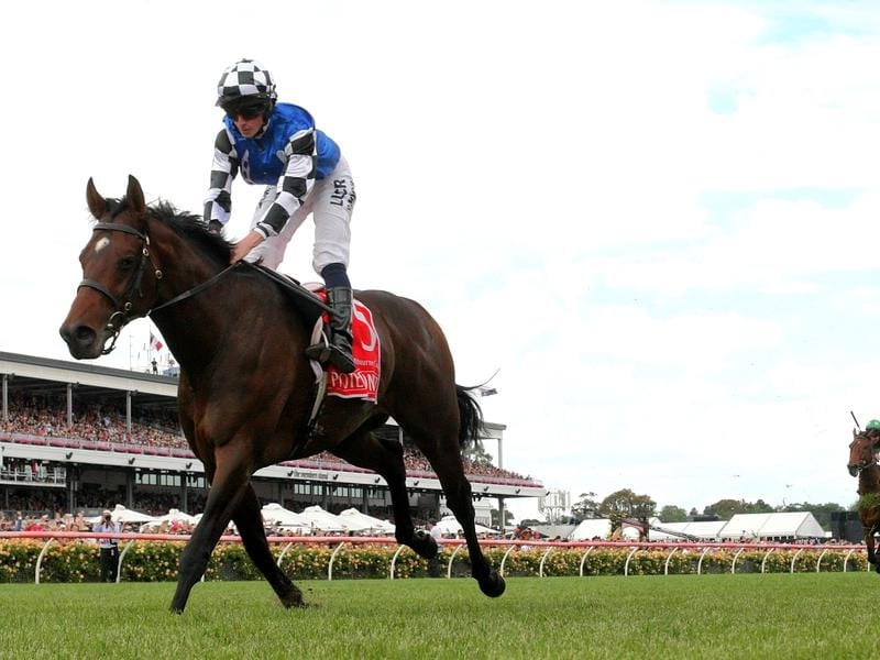 melb cup winner protectionist