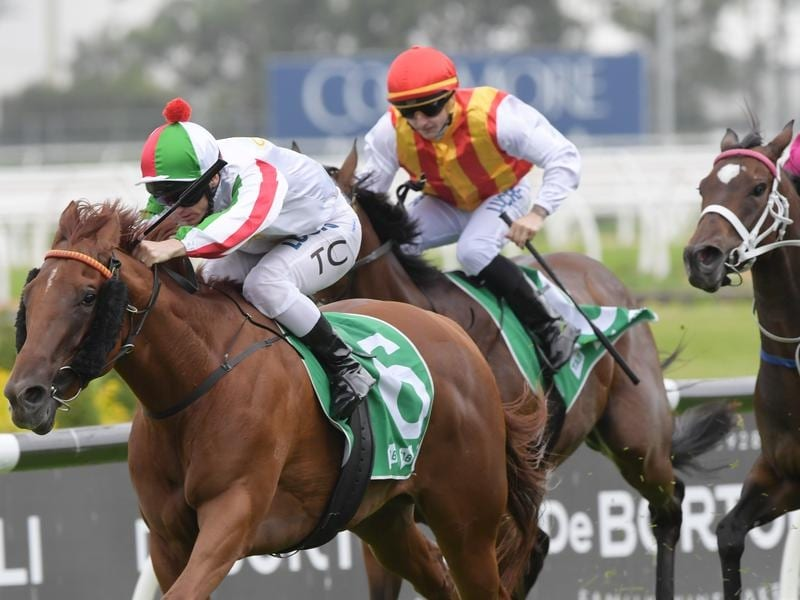 Vegadaze will contest the Group Two Missile Stakes.