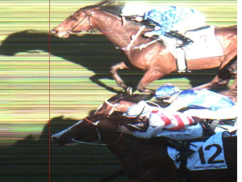 Official photo-finish from the Show County Quality.