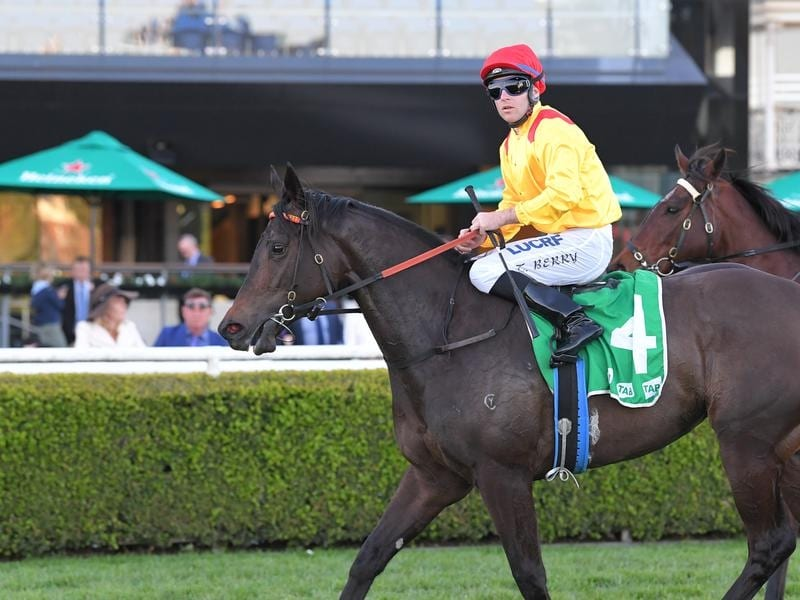 Mizzy after winning the Toy Show Quality at Randwick.