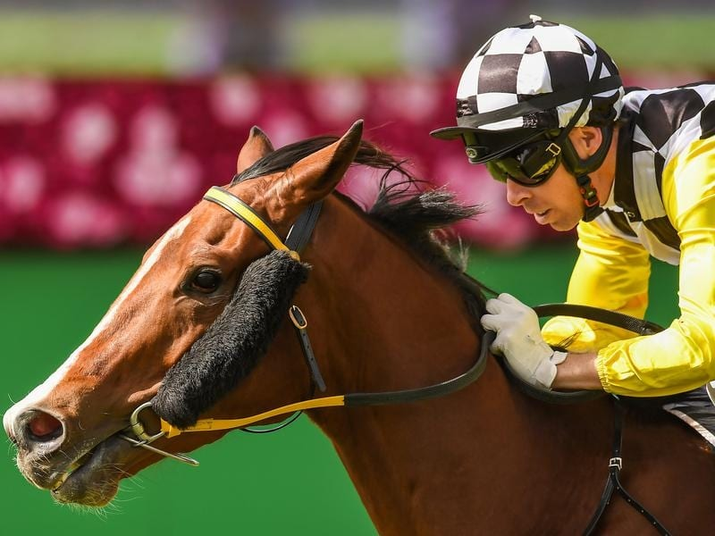 Profit will race over 1400m at Eagle Farm.
