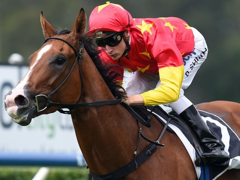 Group One winner First Seal.
