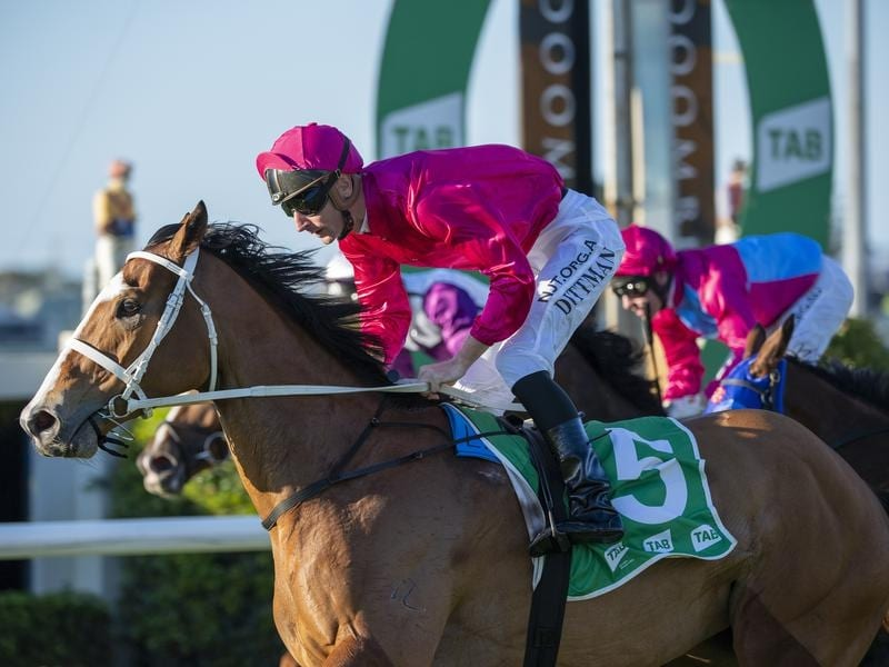 Sure Knee wins the Group Three Sapphire Stakes at Doomben.