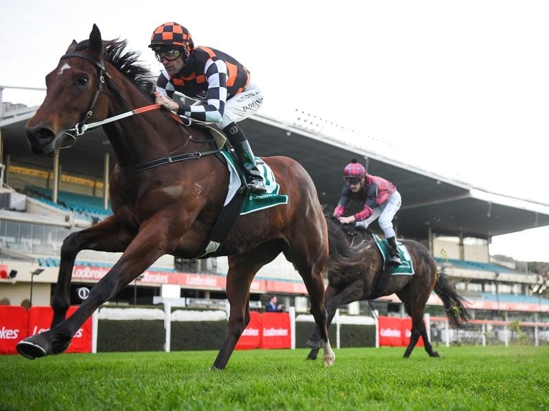 Kalkarni Royale set for stakes race tilt at Flemington