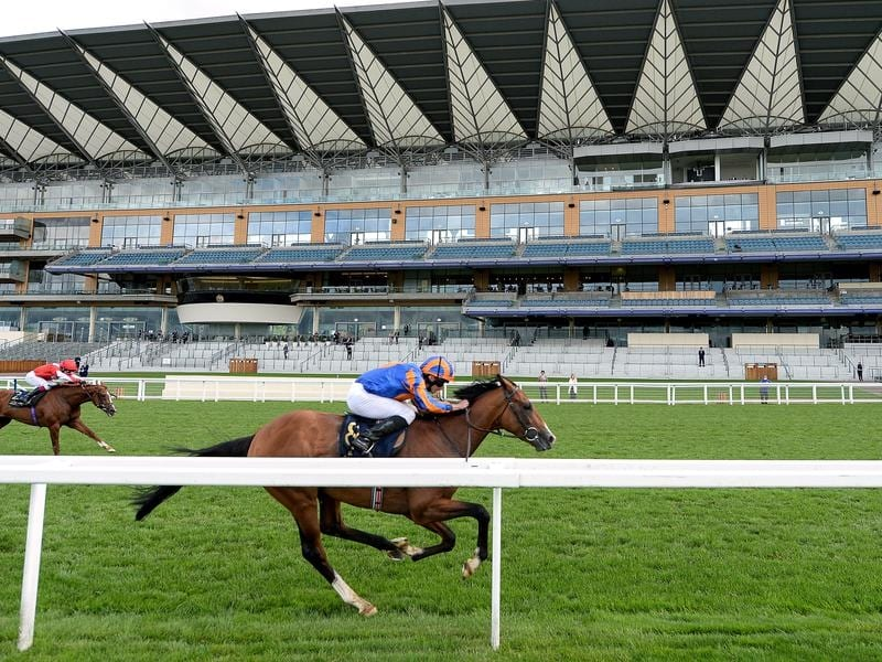 Santiago, winning at Royal Ascot, has claimed the Irish Derby.
