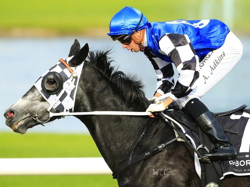 Attention Run heads early markets on the WJ McKell Cup at Rosehill.