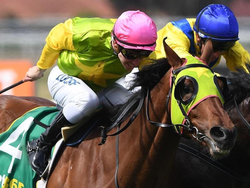 The John Sargent-trained Home Ground resumes racing at Rosehill.