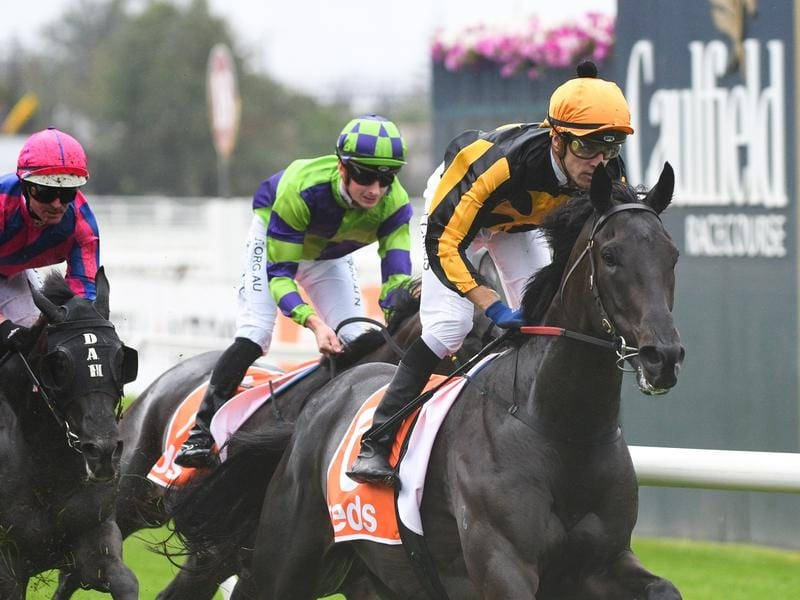Nonconformist is being trained for the Caulfield Cup.