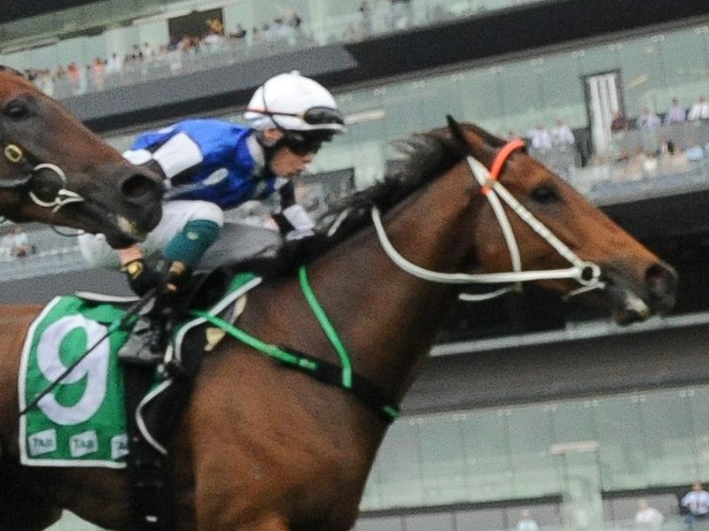 Mugatoo wins the Coopers Hotel Newtown Handicap