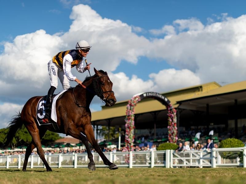Matthew McGillivray rides Azuro to victory in the Queensland Cup