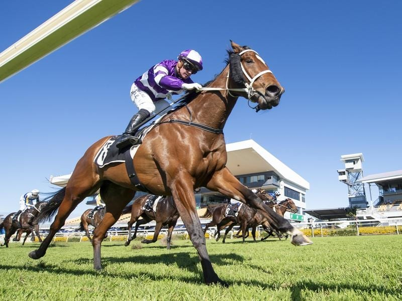 Chris Waller-trained Starla aims for Winx Guineas success
